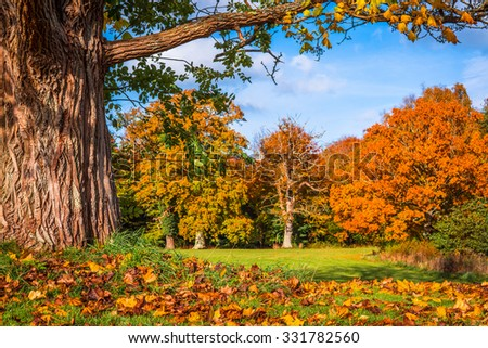 Autumn leaves under a big tree in the fall - stock photo