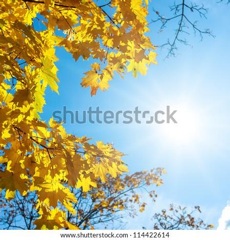 Autumn leaves under a sunny blue sky - stock photo