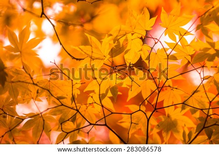 autumn leaves, very shallow focus - stock photo