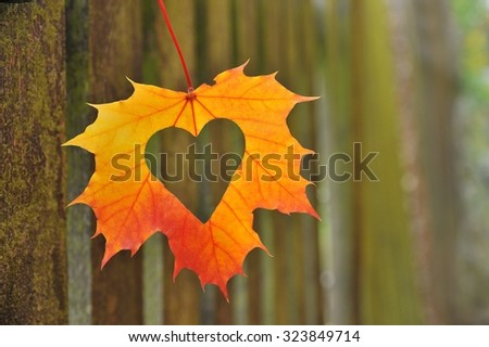 Autumn Leaves With Heart. Fall Background For Love. Picket Fence.