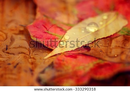 Autumn Leaves with Morning Dew - stock photo