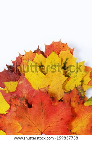 autumn leaves with space for your text