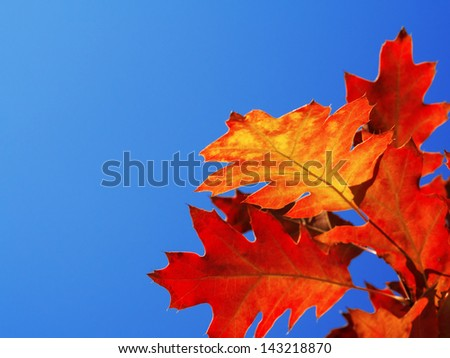 Autumn leaves with the blue sky background - stock photo