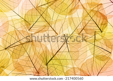 Autumn Leaves yellow and orange Background - transparent cell structure - stock photo