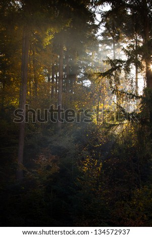 Autumn light coming through the trees