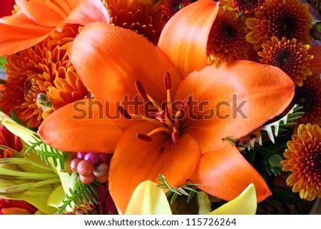 Autumn Lily - stock photo