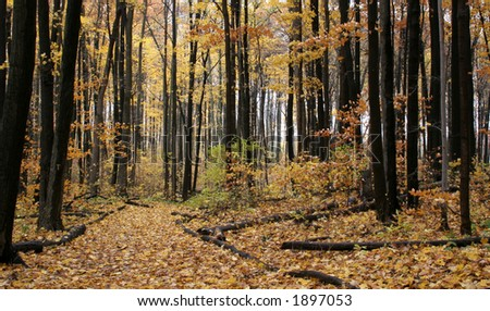 Autumn log trail with a yellow and orange floor.