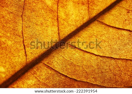 autumn magnolia leaf, very shallow focus, macro photography - stock photo