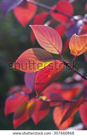 Autumn many-coloured leaves on green  background - stock photo