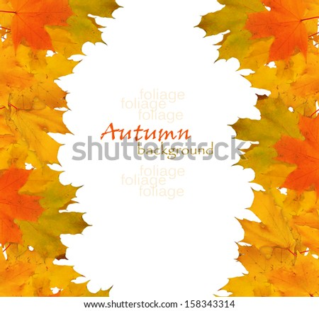 Autumn maple branch with leaves isolated on a white background - stock photo
