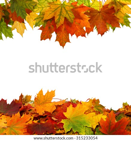 Autumn maple falling leaves isolated on white background  - stock photo