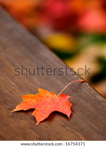 Autumn maple leaf fallen on a picnic table - stock photo