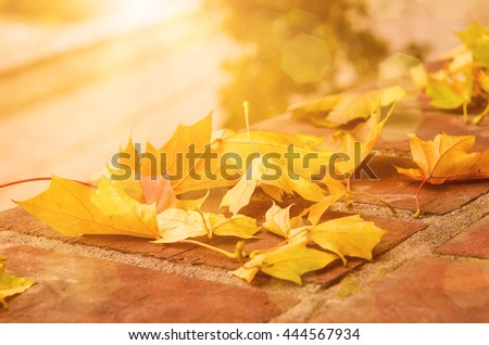 Autumn maple leaf lying on the tile, seasonal fall natural sunny background - stock photo