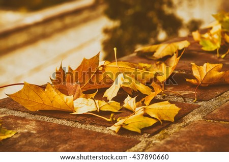 Autumn maple leaf lying on the tile, seasonal fall natural vintage hipster background - stock photo