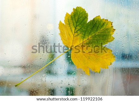 autumn maple leaf on glass with natural water drops