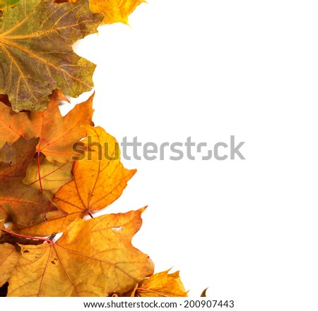 Autumn maple-leafs background with copy space