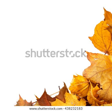 Autumn maple leafs background with copy space