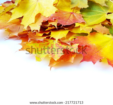 autumn maple leafs isolated on a white