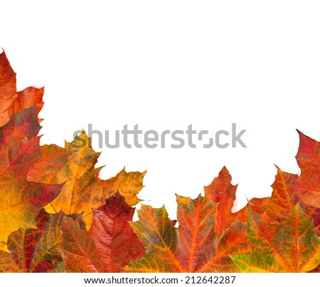Autumn maple leafs isolated on white background