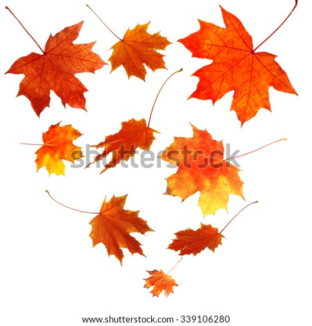 Autumn maple leaves falling down, isolated on white - stock photo