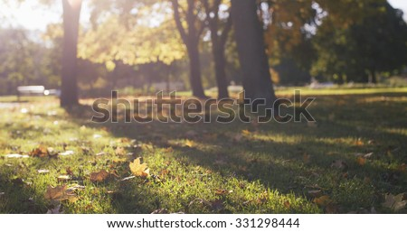 autumn maple leaves in park fall season - stock photo