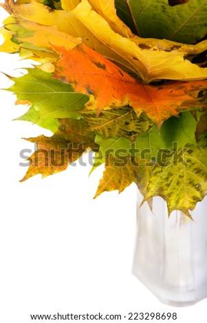 Autumn maple leaves in vase - stock photo