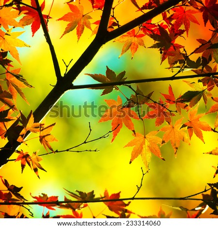 Autumn maple leaves in warm pastel colors.  - stock photo
