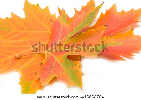 Autumn maple leaves on a white background - stock photo