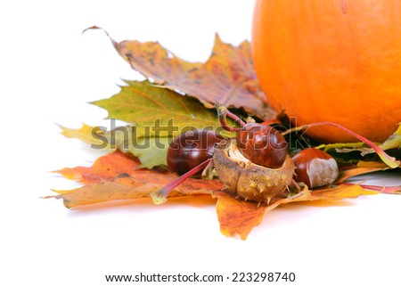 Autumn maple leaves with chestnuts and pumpkin - stock photo