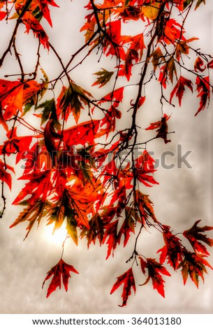 Autumn maple red leaves against a cloudy overcast sky - stock photo