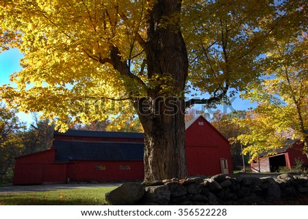 Autumn maple tree and barn, New Hampshire