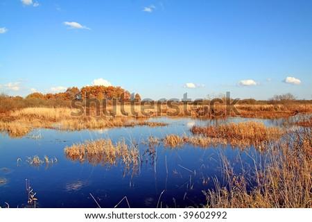 autumn marsh - stock photo