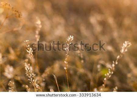 Autumn meadow on sunset, close - stock photo