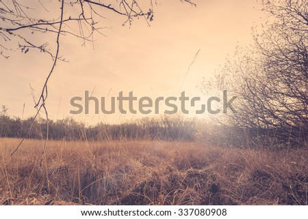 Autumn meadow with tall grass in the sunset - stock photo