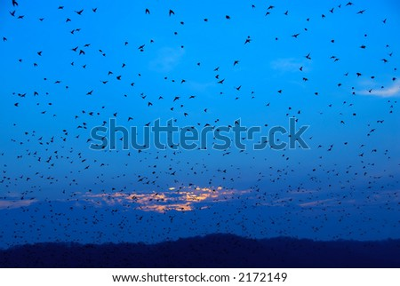 Autumn Migration - As the sun was setting, hundreds of birds flew out of the trees to begin their migration south for the winter. It reminded me of the old move by Alfred Hitchcock, The Birds. - stock photo