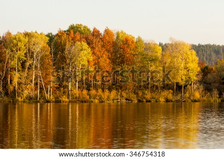 Autumn mixed forest reflected in the water bright colors of autumn trees. Autumn forest and lake in the fall season.  - stock photo