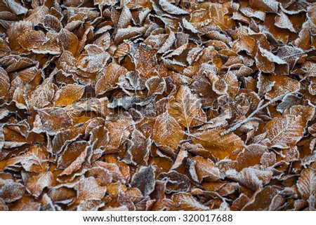 Autumn morning iced leaf texture background - stock photo
