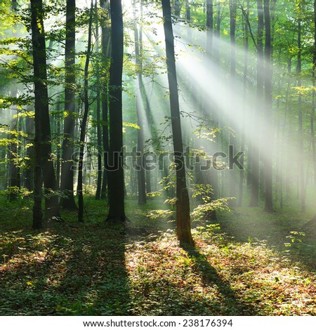 autumn morning in the forest - stock photo