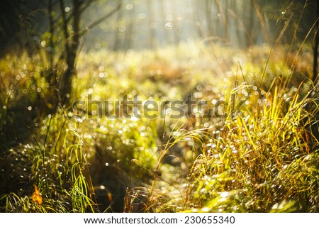 Autumn morning light in north Poland.Pomerania province/Autumn morning light - stock photo
