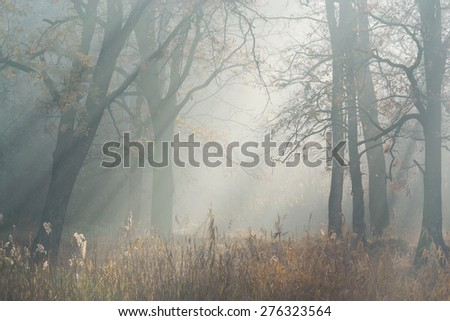 autumn morning sun rays filtering through the mist among the trees