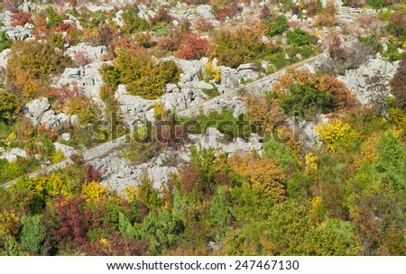 autumn mountain forest and road, Montenegro - stock photo