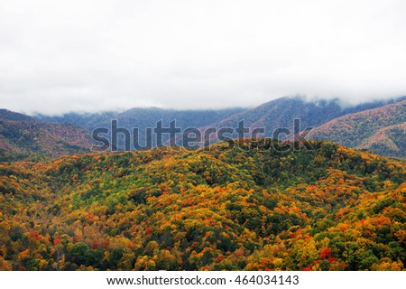 autumn mountain forest with colorful trees