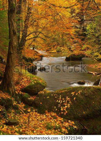 Autumn mountain river with low level of water, fresh green mossy stones and boulders on river bank covered with colorful leaves from maples, beeches or aspens tree, reflections on wet leaves.  - stock photo