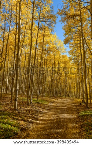 Autumn Mountain Trail - A dirt mountain hiking trail through a dense autumn aspen grove. Colorado, USA. - stock photo