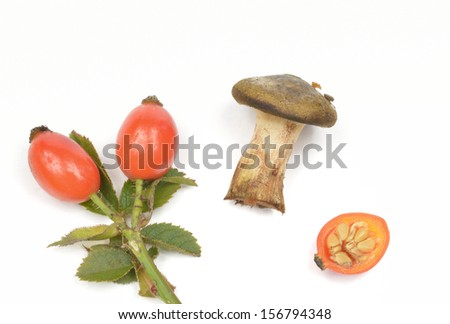 autumn: mushroom and rose hips