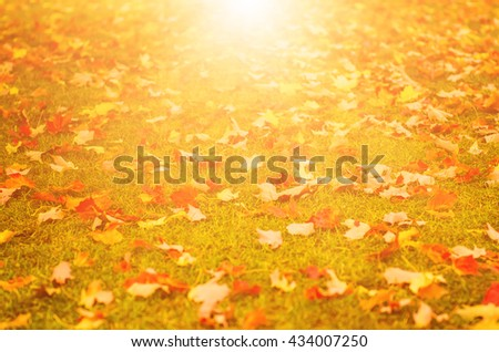 Autumn natural flat sunny background with colorful red maple leaves on a green grass - stock photo