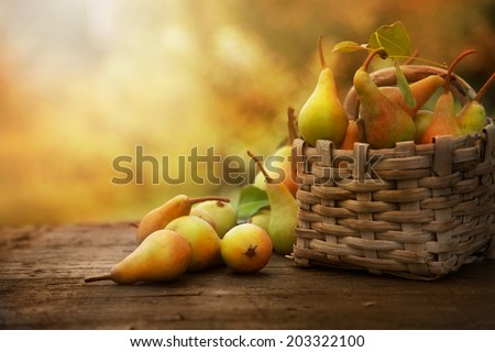 Autumn nature concept. Fall pears on wood. Thanksgiving dinner - stock photo