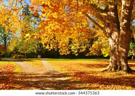 Autumn nature, fall tree background