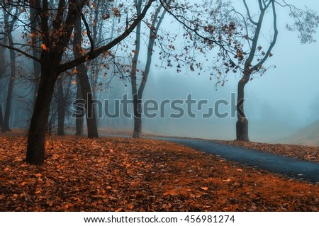 Autumn nature -foggy autumn view. Autumn park alley in dense fog - foggy autumn landscape with bare autumn trees and orange fallen leaves. Autumn alley in dense autumn fog. Soft filter applied. - stock photo