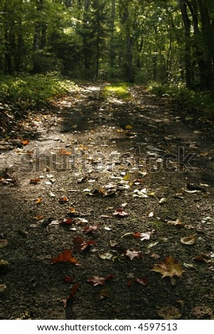 autumn nature: secluded road with fallen colorful leaves on it - stock photo